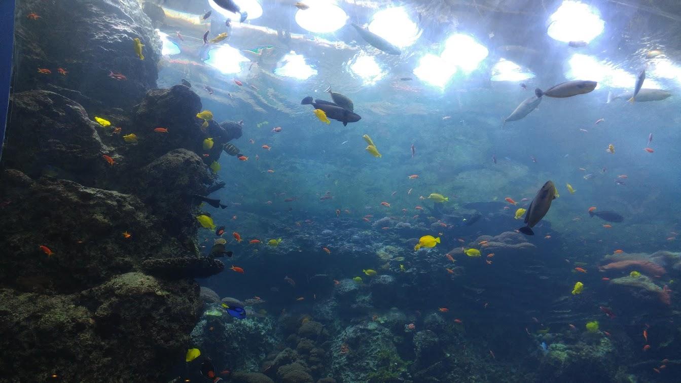 So many colorful fish